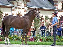 Haras de Saint-Lo (capitale du cheval) à 25min du Gîte