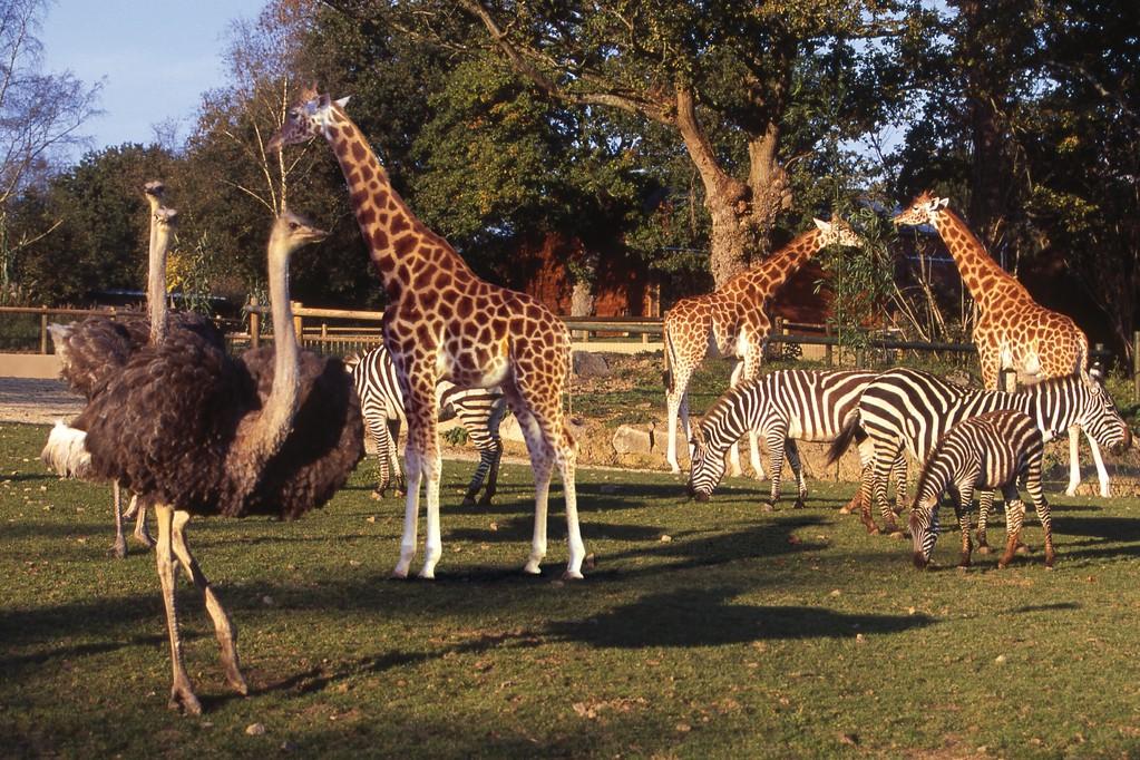 Zoo de Champrepus à 30min du Gîte