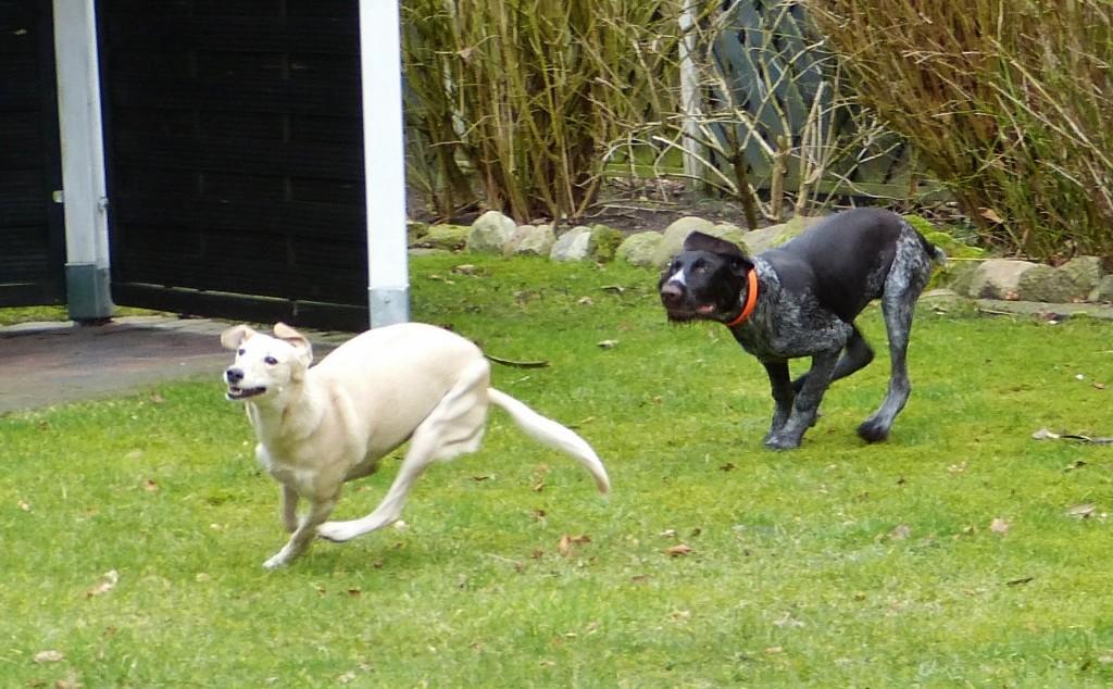 Luna und Rudi