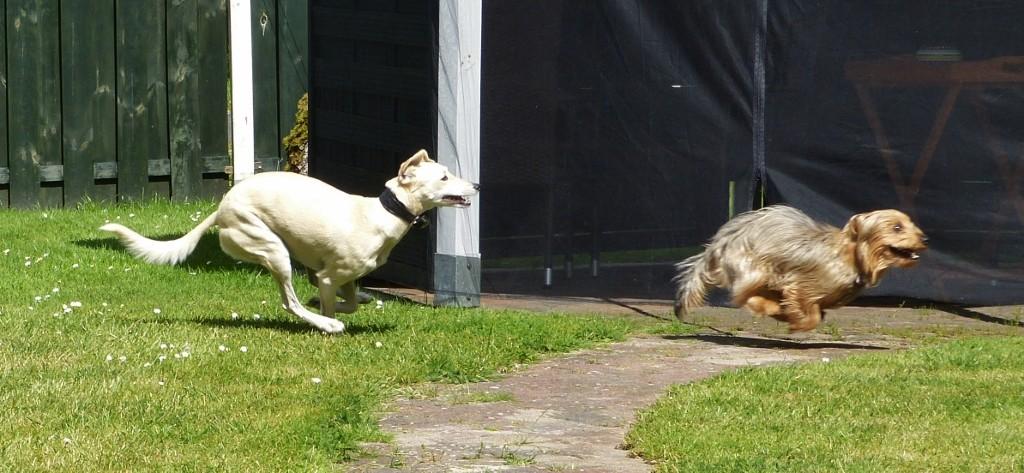 Luna und Drago
