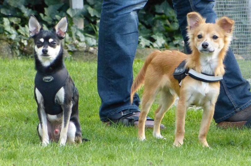 Jessy und Moritz