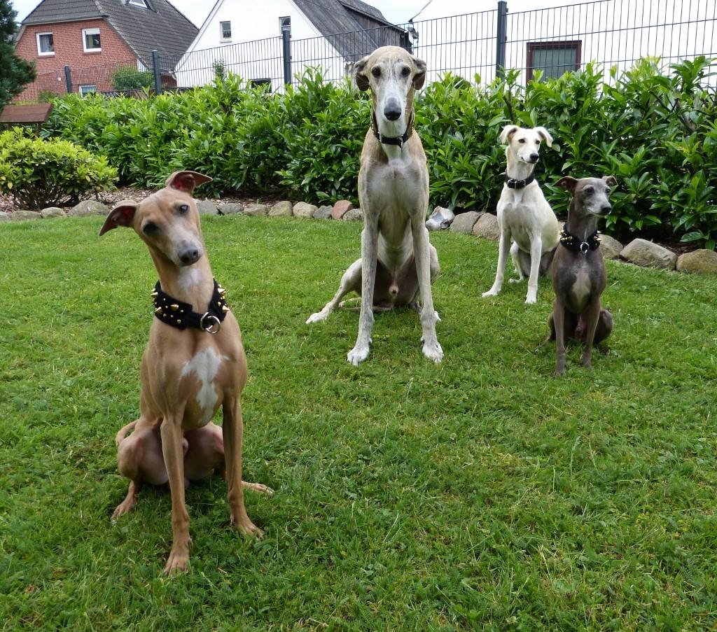 Percy, Spyder von Erdberg, Luna, Amadeo