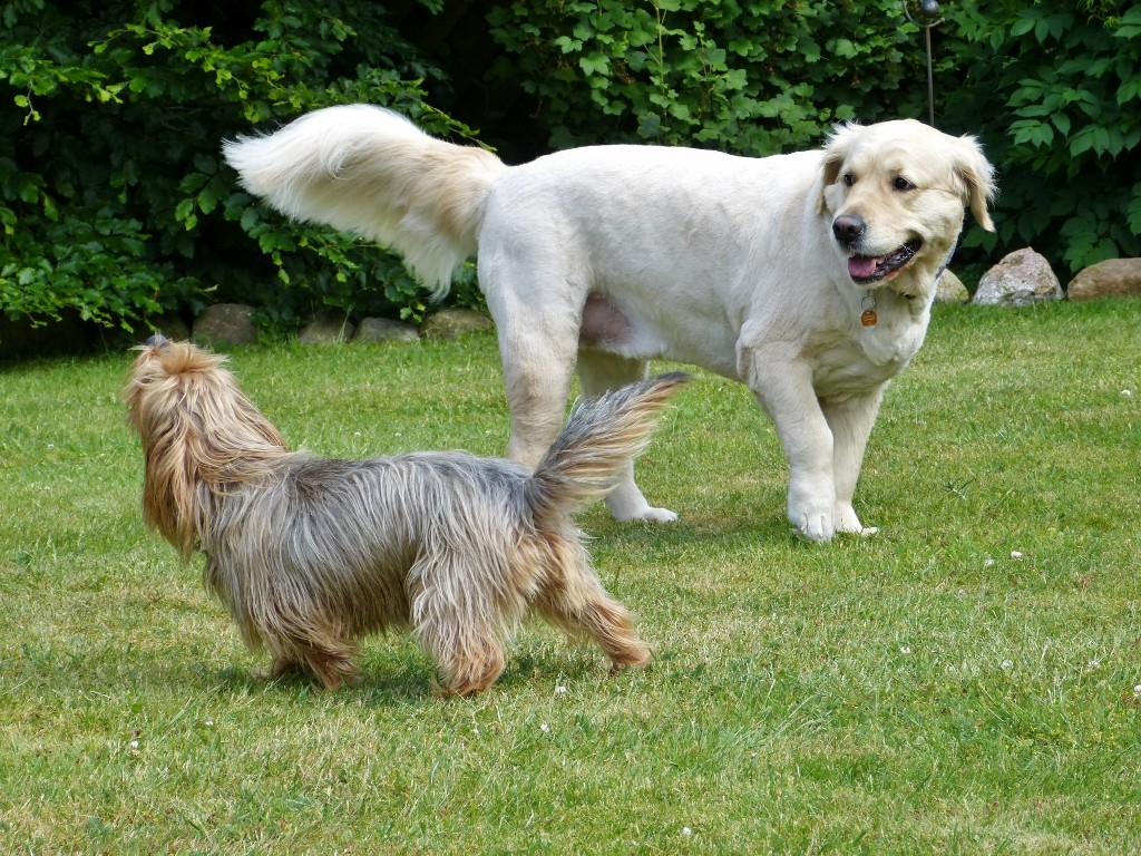 Drago und Baska