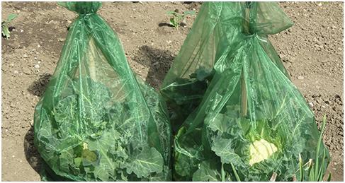 Neuartiges Insektenschutznetz für Gemüsearten wie Kohl imn Hausgarten, Schrebergarten