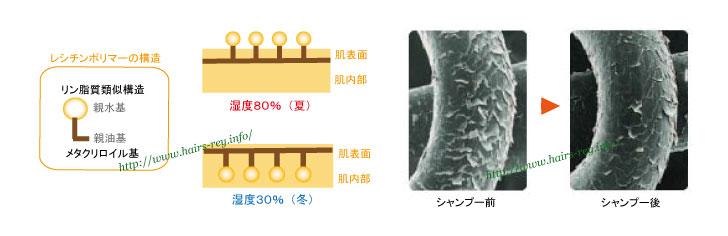 ヒアルロン酸の2倍の水分保持機能を持つレシチンポリマー