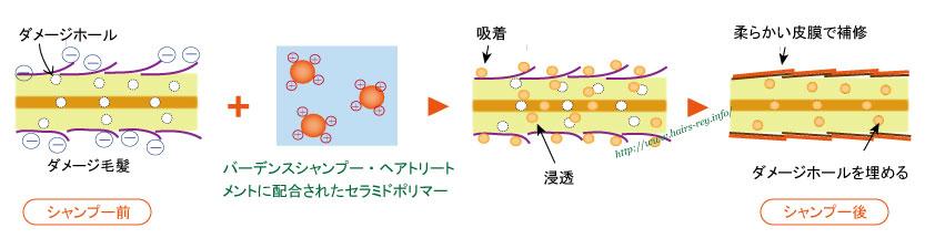 セラミドポリマーは酢酸のみに反応