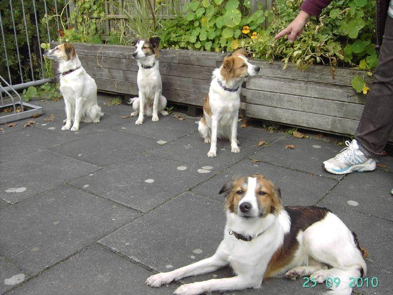 oben links Farina, Asko, Akira und Amina