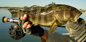 San Diego Mission Bay spotted bay bass Fly Fishing