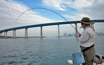 Fly Fishing hook up on San Diego Bay by Coronado Bridge