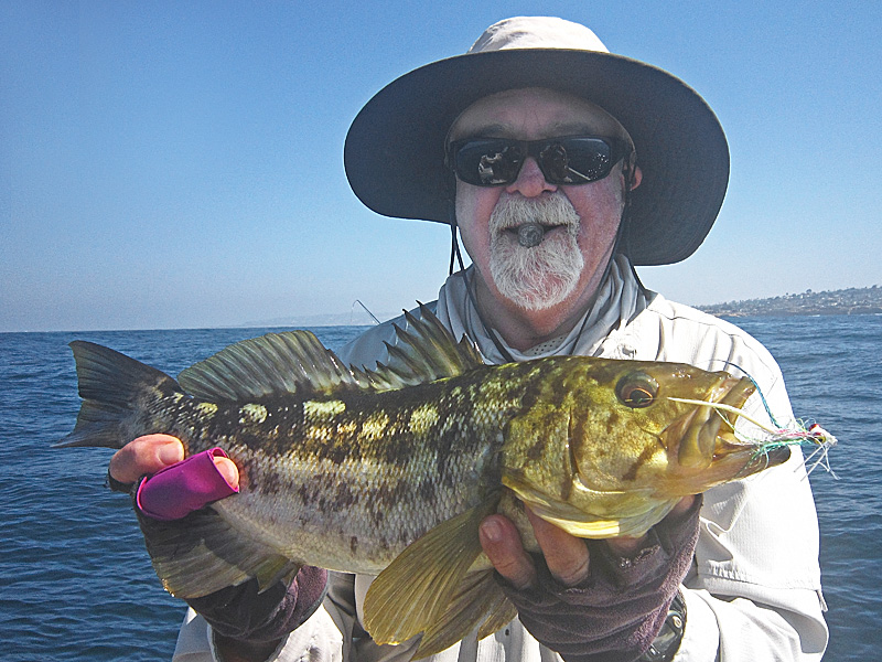 Wrapping up august off pt loma san diego fly fishing for Fly fishing san diego