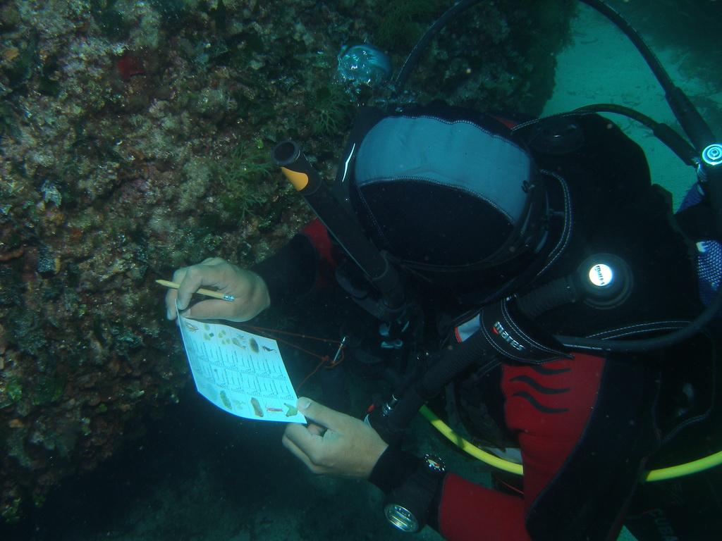 Protocole de surveillance sous-marine