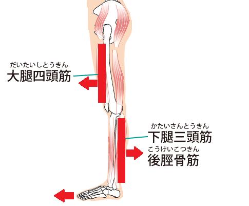 浮指で過剰に使われる筋肉