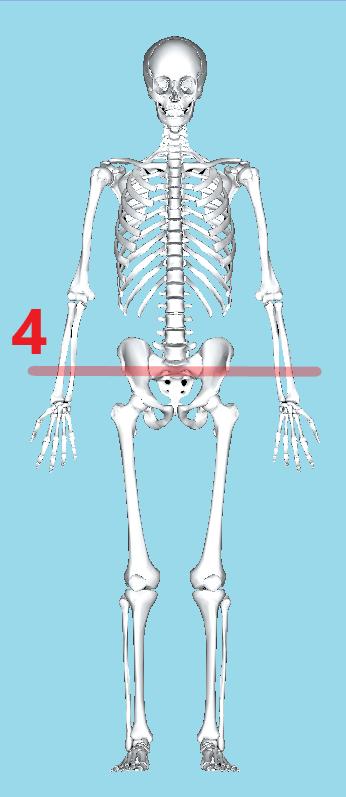 骨盤の前側の突起の高さでねじれをみます