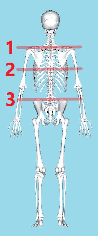 肩の高さと肩甲骨下端の高さと骨盤頂点の高さをみます