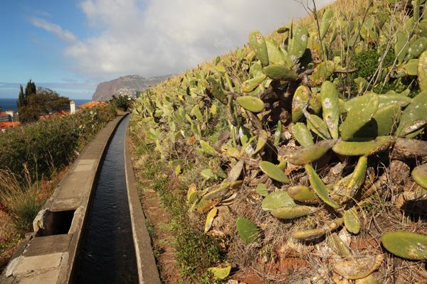 Levada dos Piornais im Stadtgebiet von Funchal