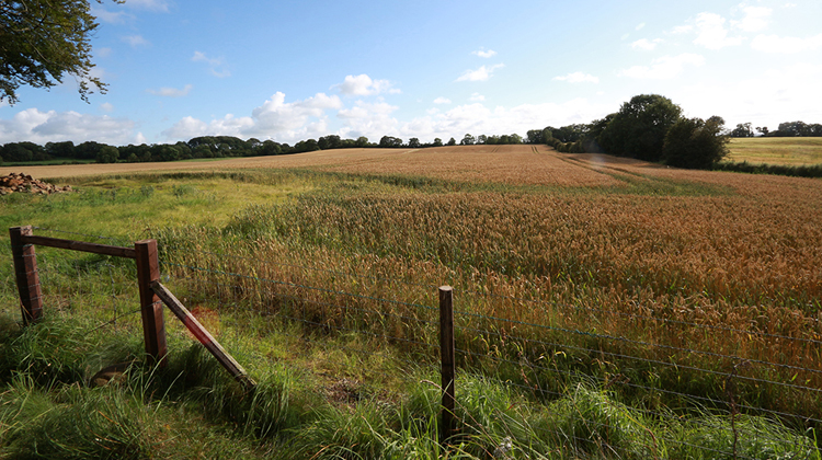 Felder jenseits der Bregagh Road.