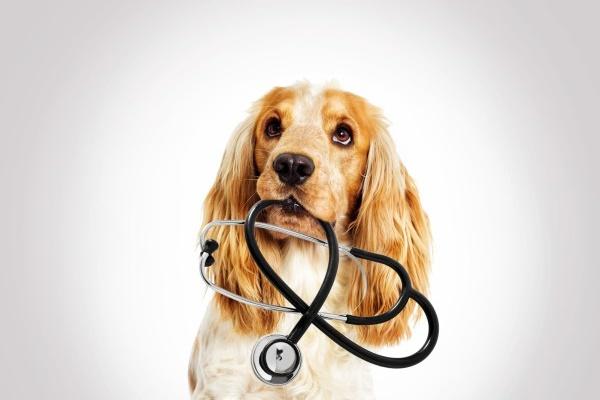 Hund Stethoskop Duovet