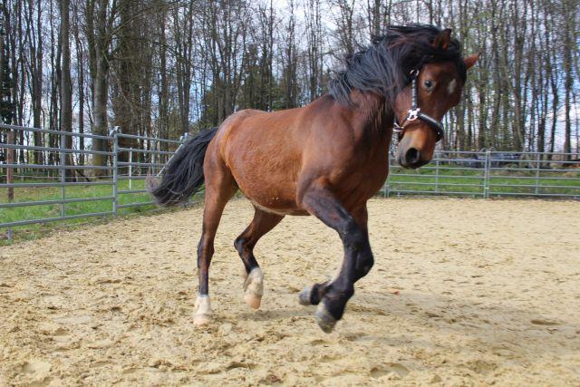 Horsemanship: Du teilst die Freiheit mit deinem Partner
