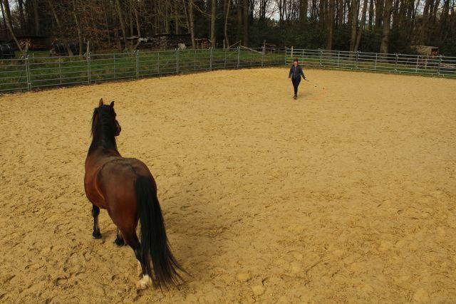 Horsemanship: Du kannst loslassen und bist dennoch verbunden