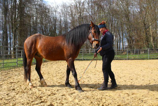 Horsemanship: Du gehst gemeinsame Wege, Schritt für Schritt