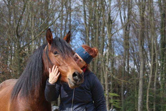 Horsemanship: Die Bedürfnisse und die Sprache des Pferdes verstehen