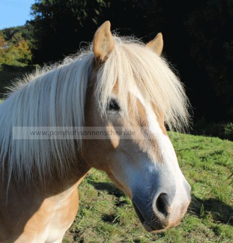Herzlich willkommen, Aron (Lokation Ponyhof)