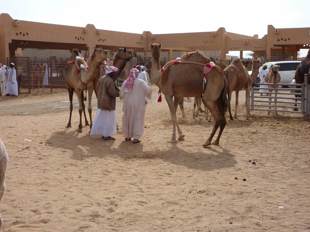 2. Tag - Al Ain - Kamelmarkt