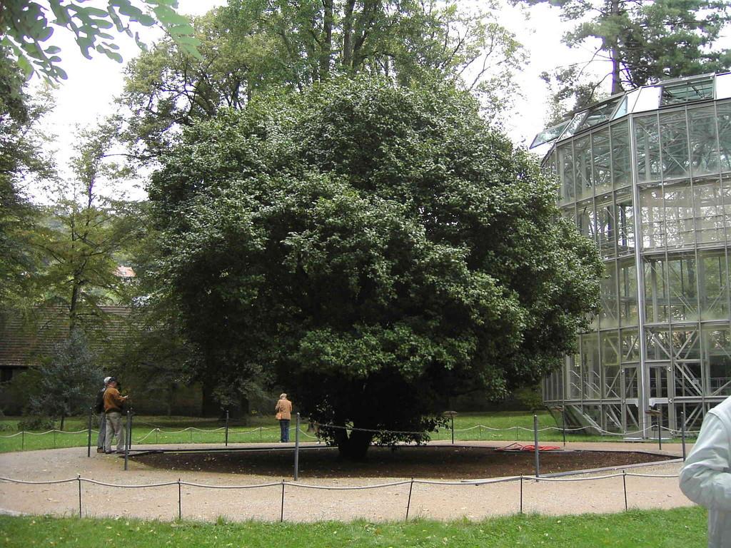 9.9.2007 Pillnitz