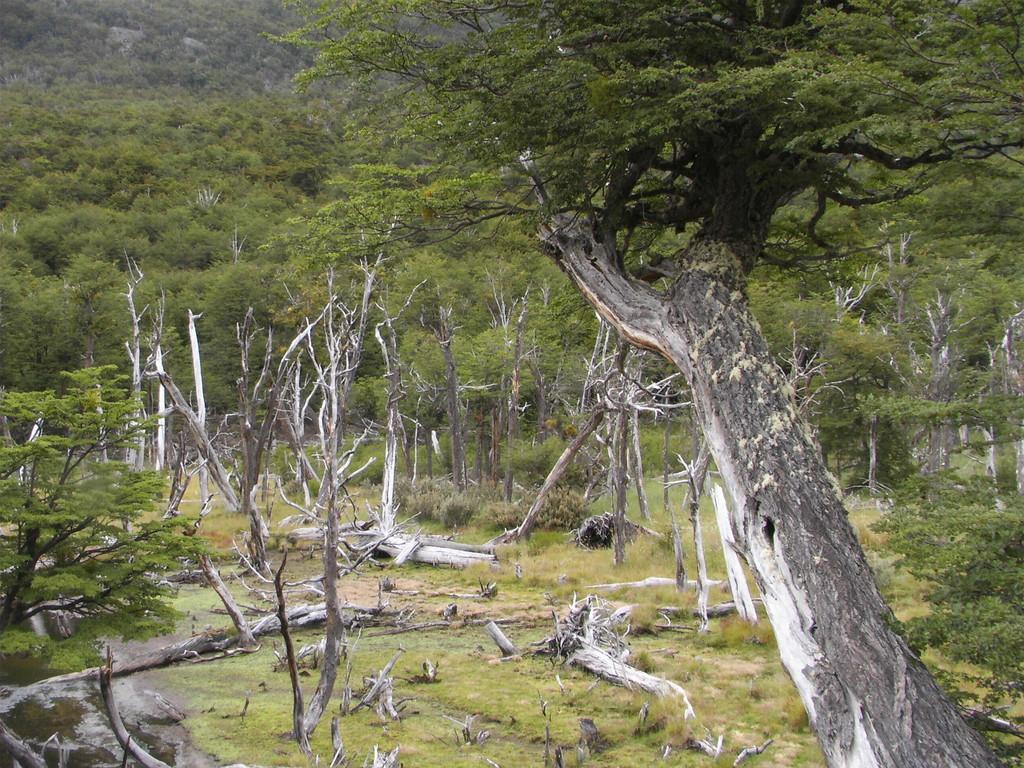 Stop in Ushuaia - Fahrt in den Nationalpark Feuerland