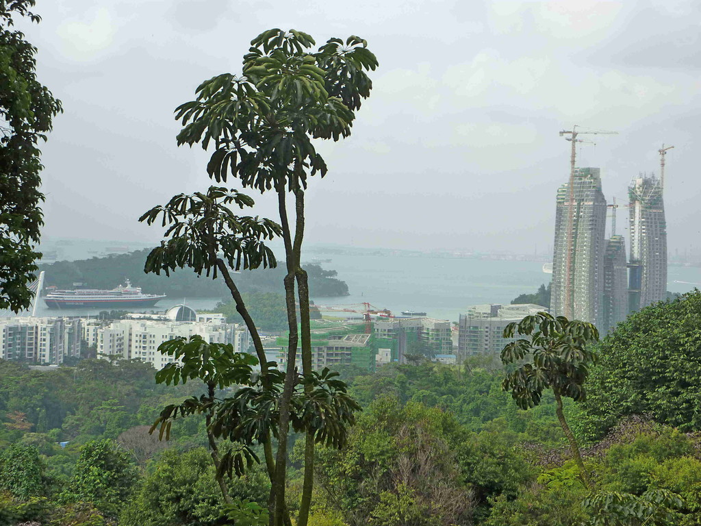 Singapur - v. 166m hohen Bukit Timah