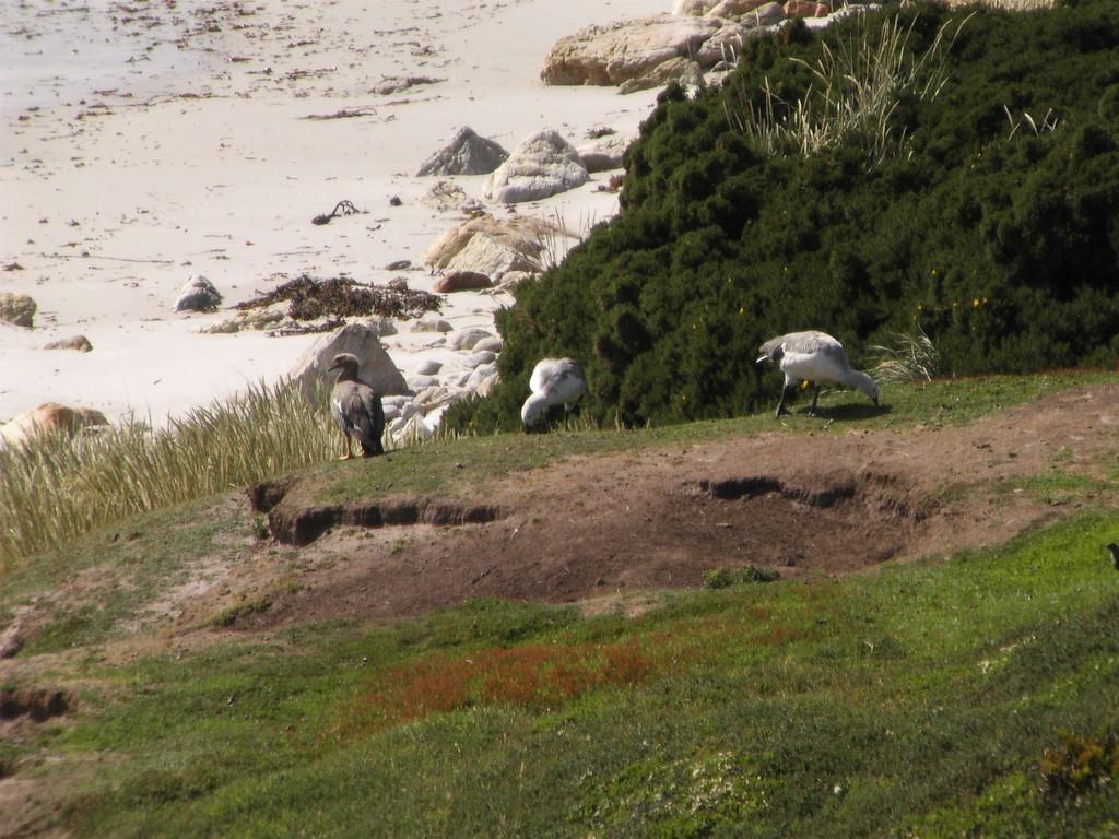 Stop Falklandinseln - Strand Gibsy Cove