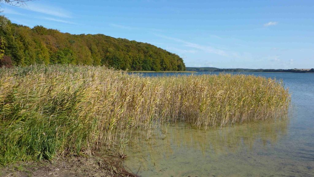 Strand an der Feldberger Hütte