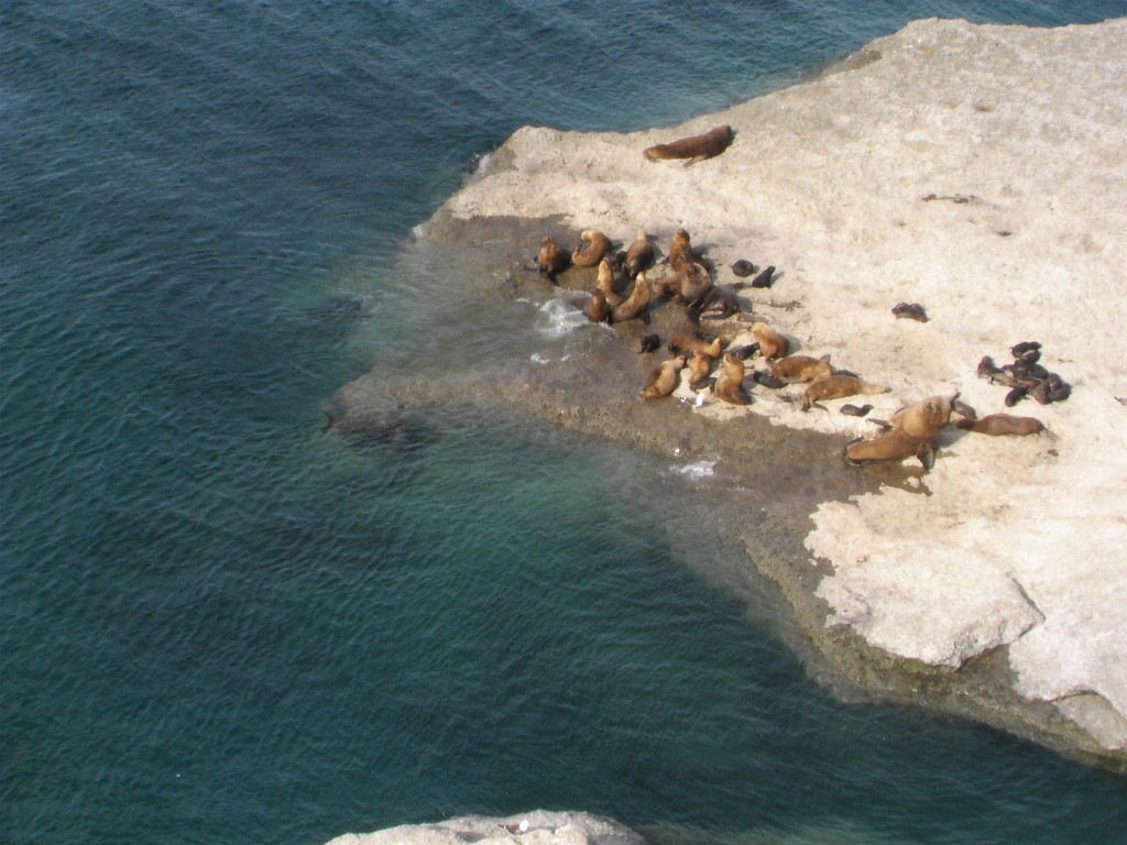 Stop Puerto Madryn - Punta Norte -Seelöwen