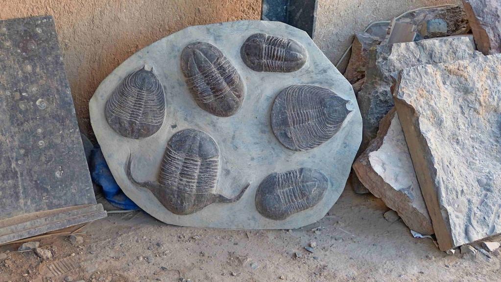 6.Tag - Erfoud - Während des Devon, Paläozoikum, etwa 380 Millionen Jahren war die marokkanische Sahara ein Boden eines riesigen prähistorischen Ozean,