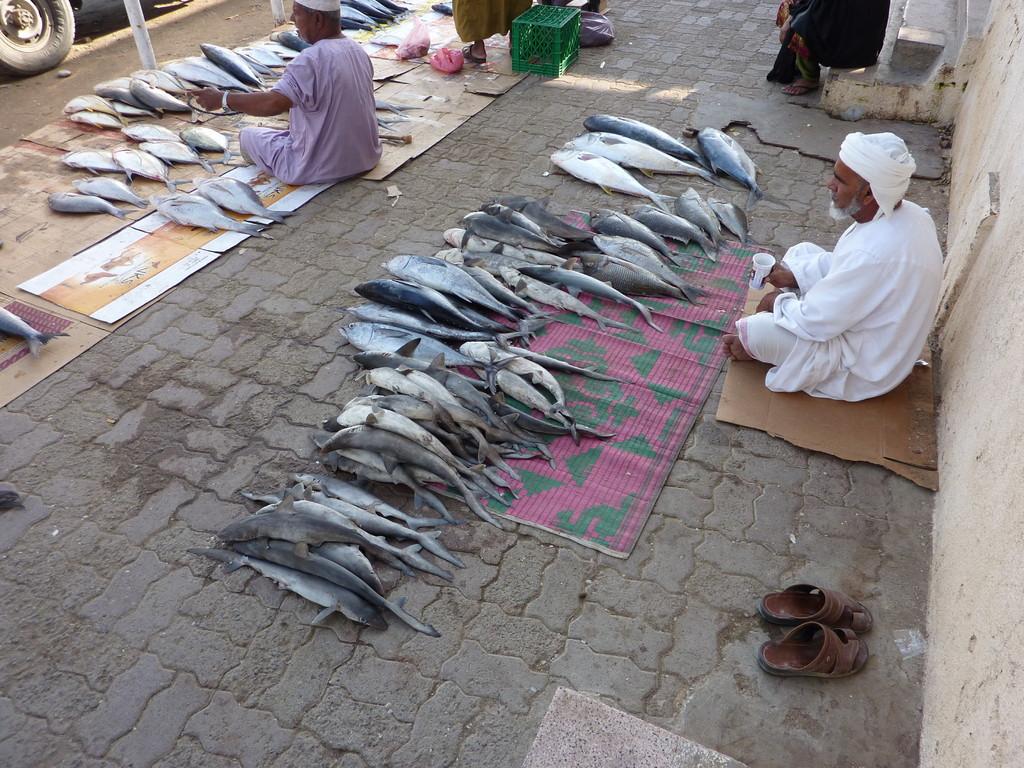 8.Tag Fahrt v. Muscat nach Fujaihra - Fischmart in Barka
