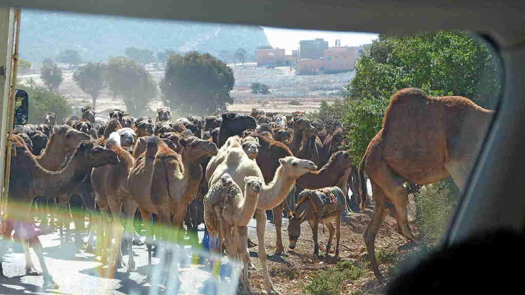 11.Tag - Fahrt von Essaouira nach Agadir