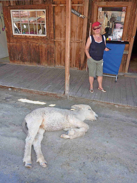 Oatman an der Route 66