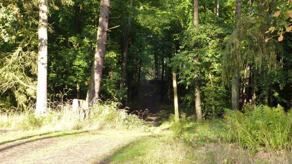 Wanderung  Heilige Hallen (Dtschld.ältester Buchenwald - über 300 Jahre alte Buchen)