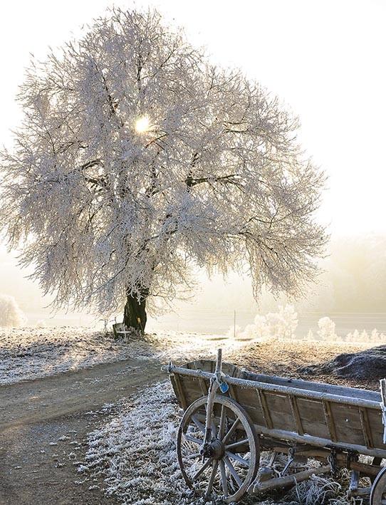 Alter Pferdewagen, Mottingeramt, NÖ - Titelbild der Ausgabe 3/2015 (Weihnachtsausgabe) der Rastenfelder Gemeindenachrichten