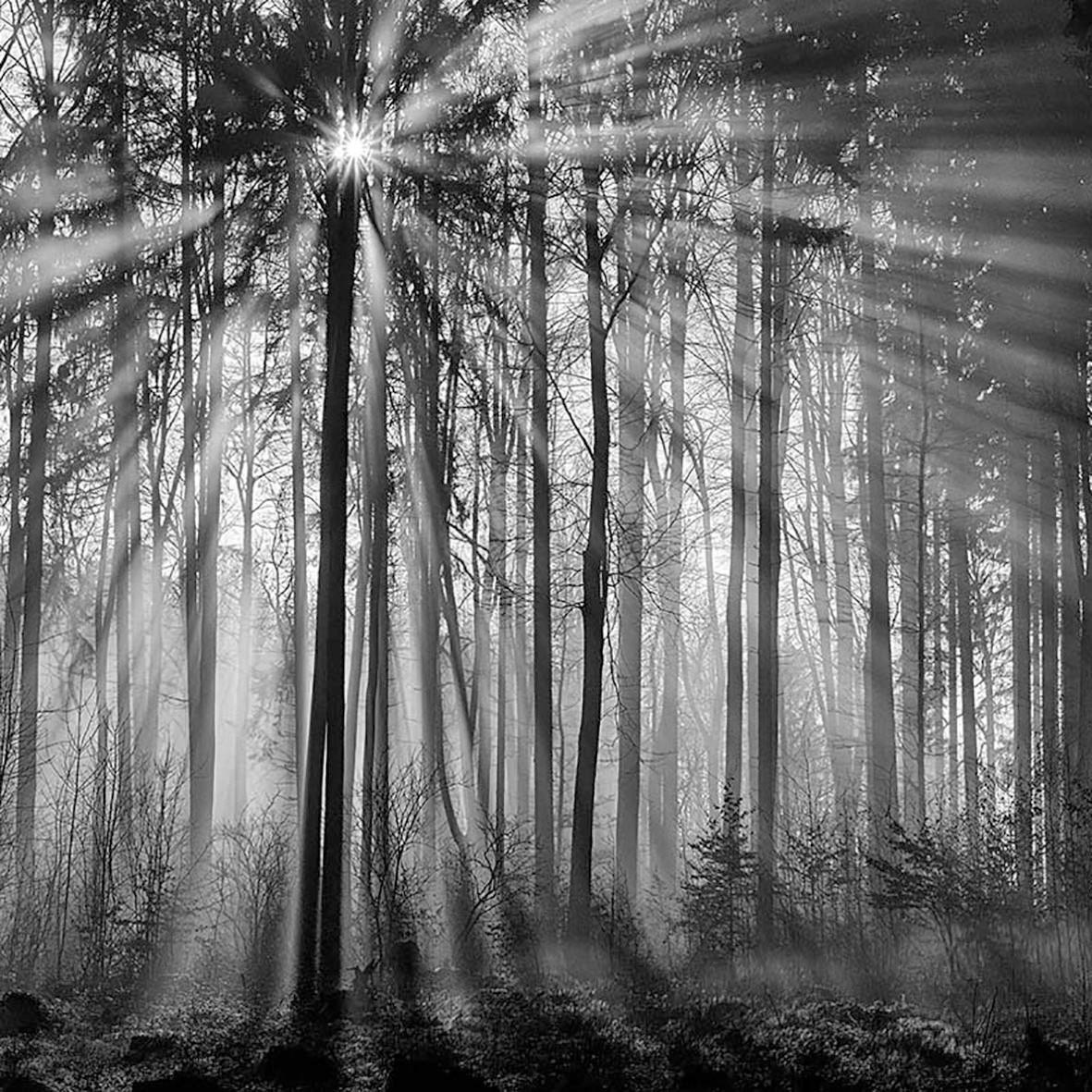 Nebel im Buchenwald, Mottingeramt/NÖ, 10.01.2016