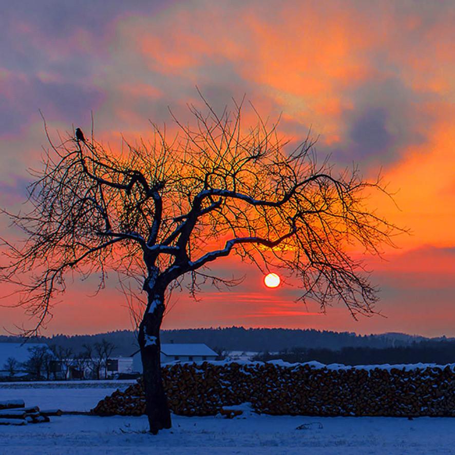 Warten auf Beute, Sonnenuntergang bei Neupölla/NÖ