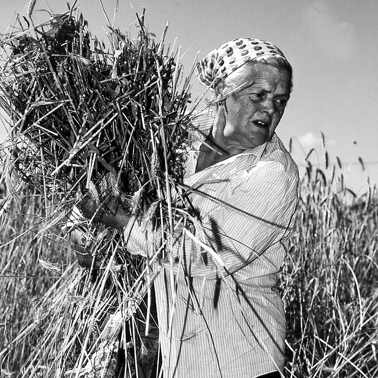 Bei der Getreideernte, Rastenfeld 1999