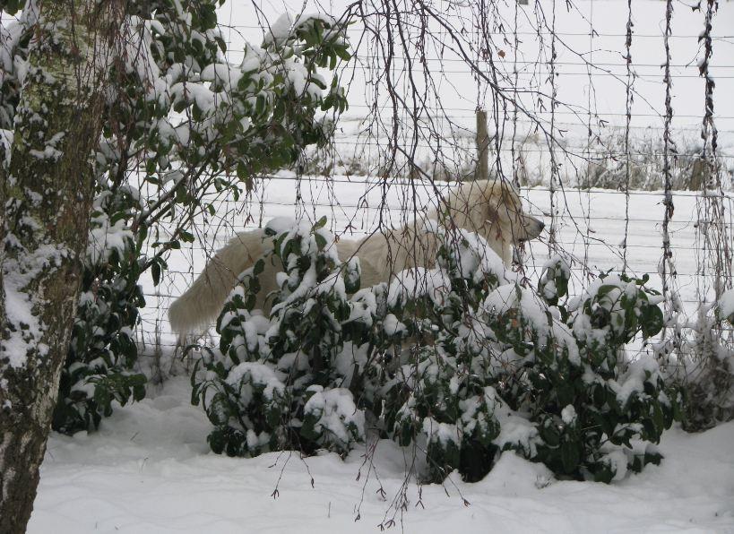 Emil - Winter 2010/11