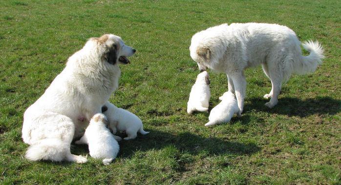 Chouchou u. Emil mit ihren Töchtern