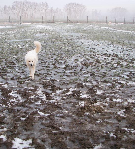 Emil (Vordergrund) + Chouchou - Winter 2010/11