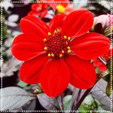 Stunning flower - Hypnotic Boxes - Dante Harker