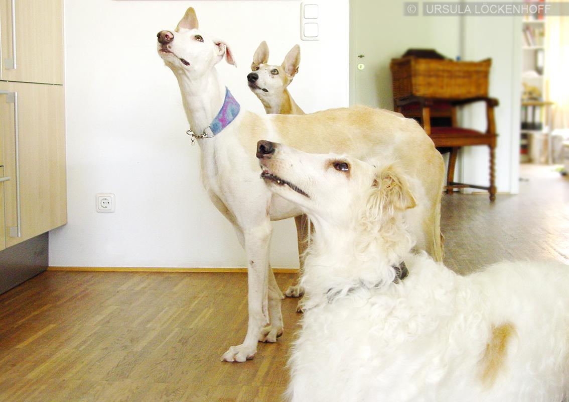 Sophie, Hanna und Olaya.