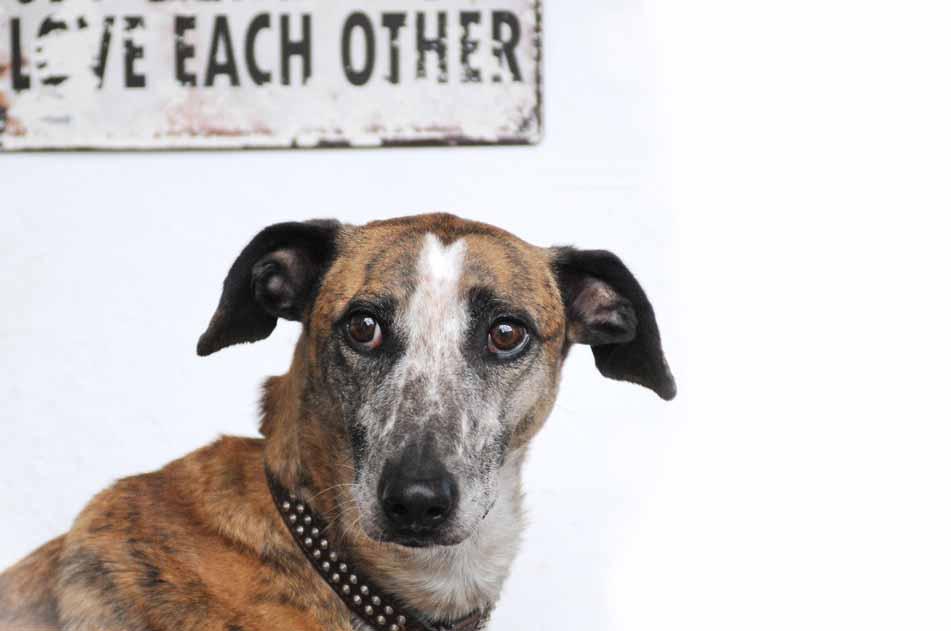 Herr Rossi (Balto) – mehr Wild- als Haushund (2016)