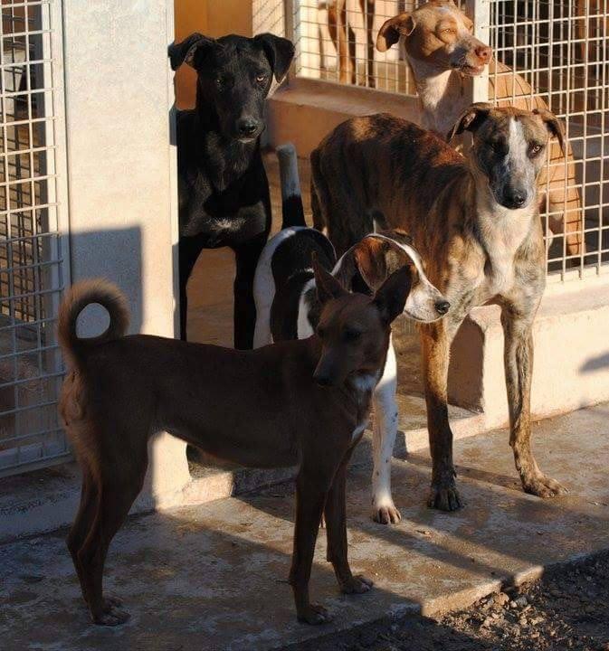 Herr Rossi – damals noch Balto im Tierheim Ciudad Animal Madrid ( 2013)