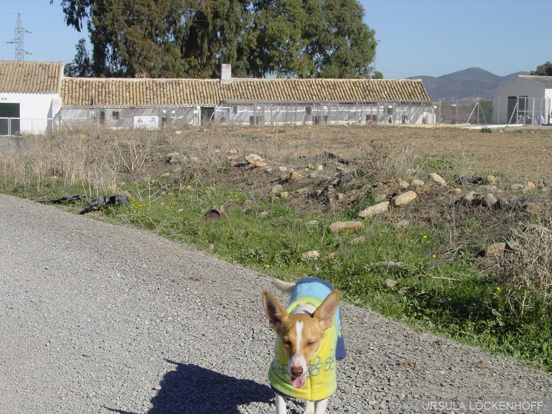 San Anton 2007